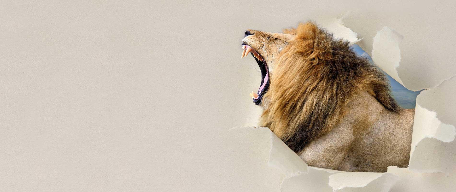 Lion-Cider-Mostschorle-Startseite